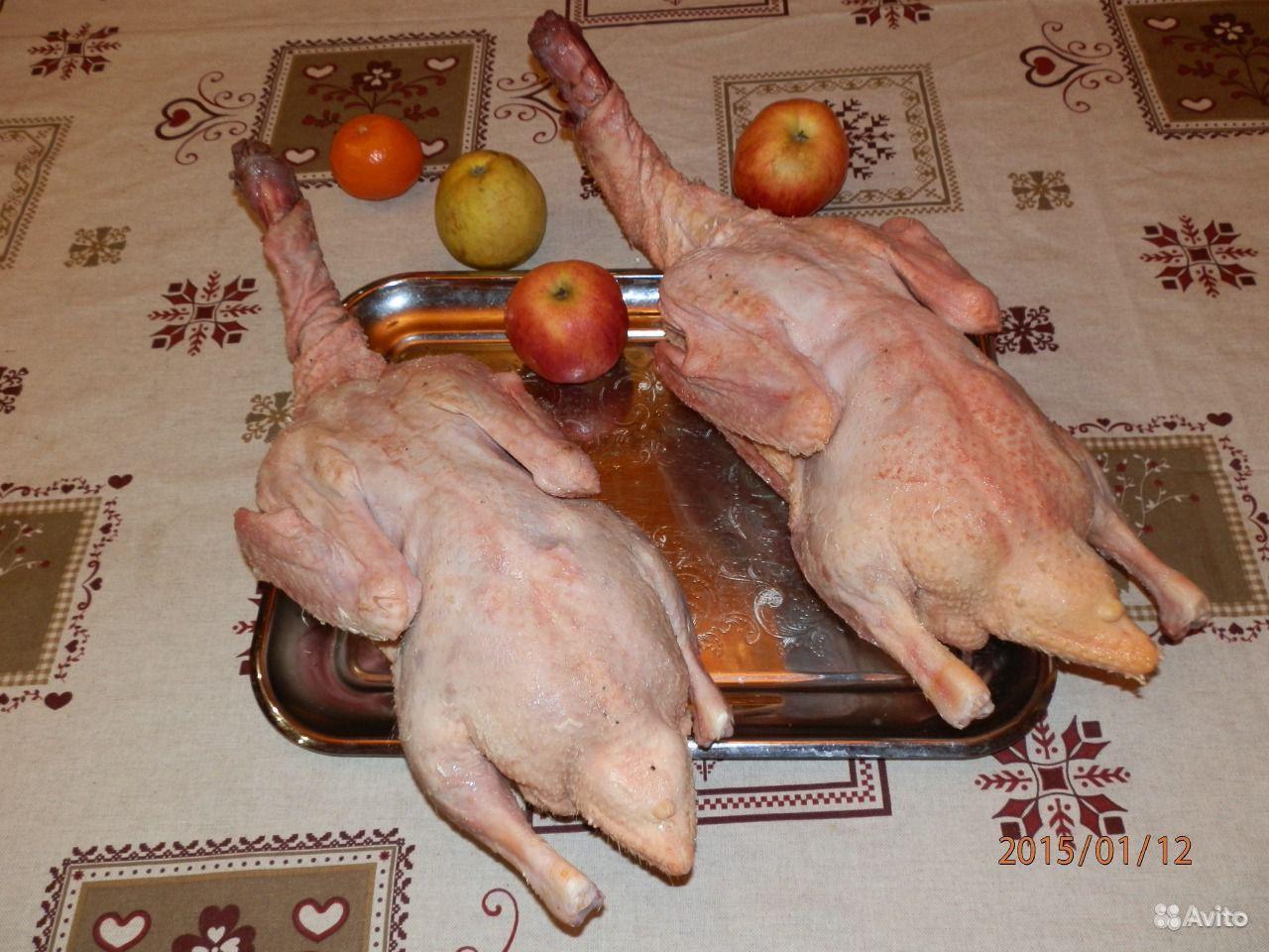 Клюв курицы: как подрезать клюв курице? 48