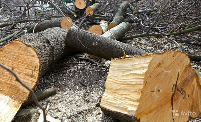 """""""Снос аварийных и сложных деревьев"""" купить на Вуёк.ру - фотография № 1"""