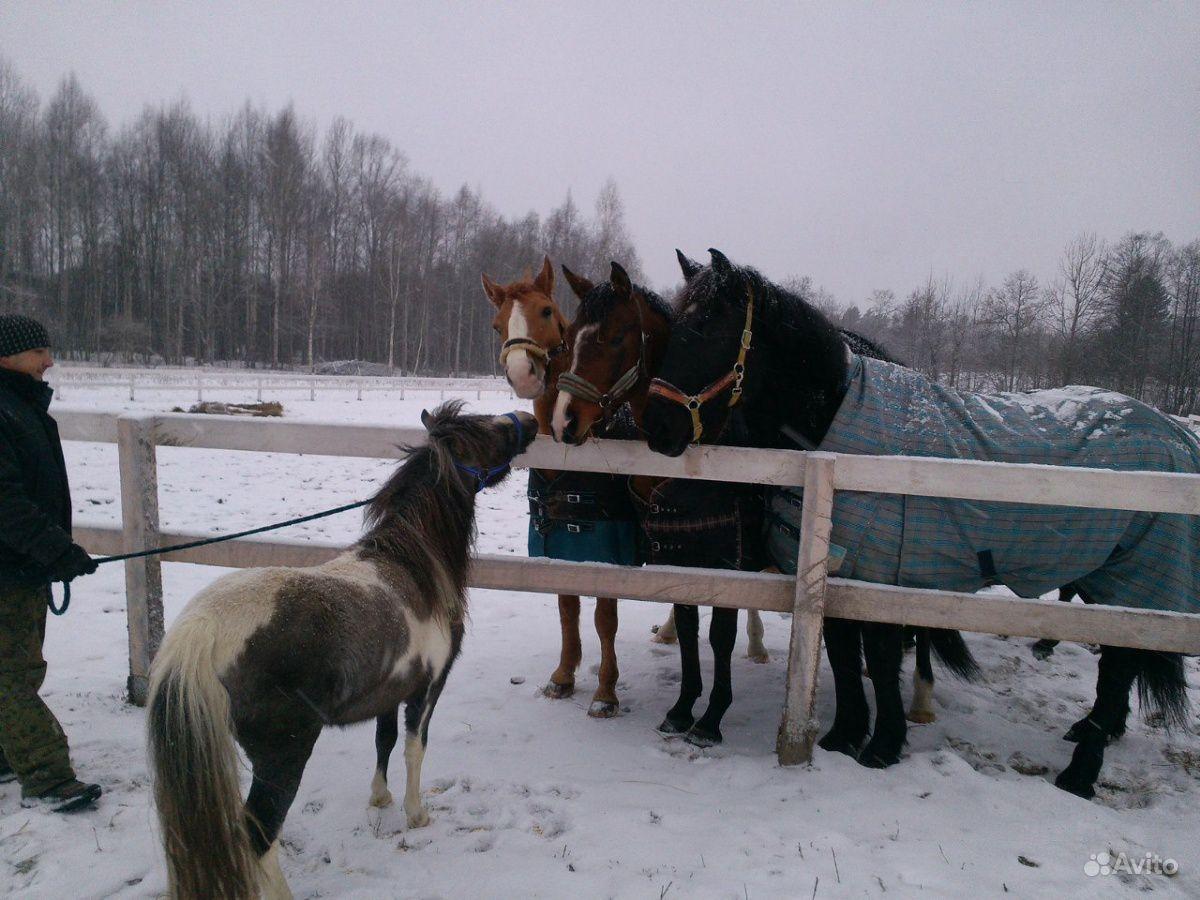 Конные прогулки и занятия верховой ездой купить на Вуёк.ру - фотография № 4