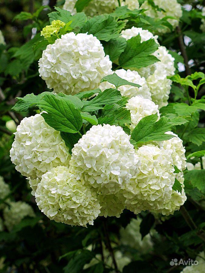 Растения купить на Зозу.ру - фотография № 10