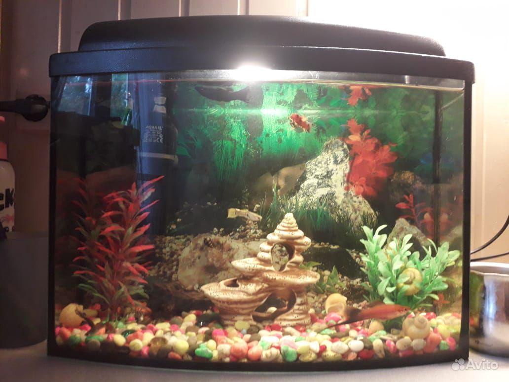 Аквариум с рыбками 25 литрой купить на Зозу.ру - фотография № 2