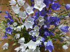 Растения садовые многолетки