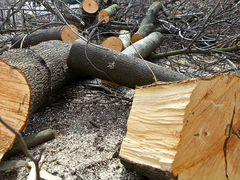 """""""Снос аварийных и сложных деревьев"""""""