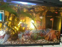 Аквариум 70 литров с рыбками