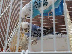 Попугаи с клеткой и гнездом