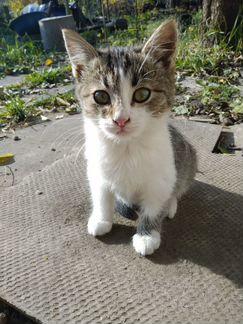 Котенок кошечка