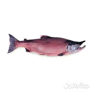 где сейчас ловится рыба в астрахани форум