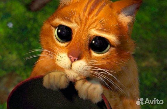 Рыжий котик в добрые и заботливые руки