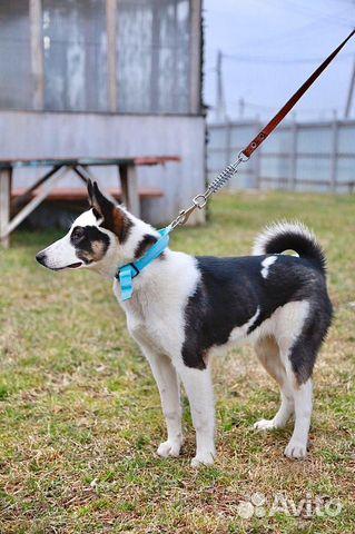 Собака в добрые руки купить на Зозу.ру - фотография № 2