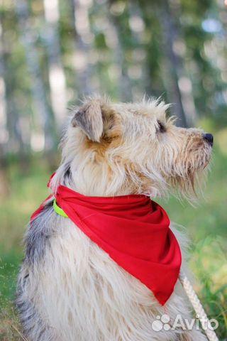 Собака неженка Иви в добрые руки купить на Зозу.ру - фотография № 5