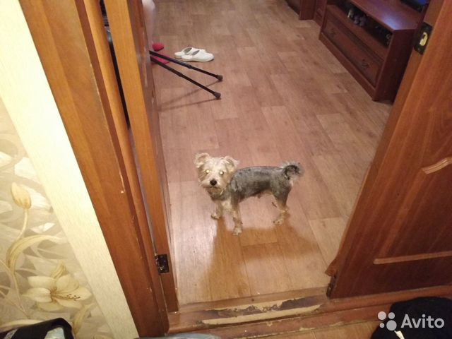 Отдам собаку в хорошие руки бесплатно купить на Зозу.ру - фотография № 3