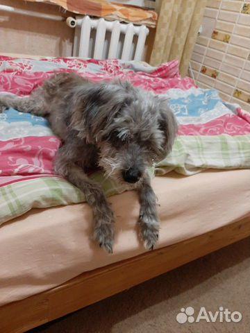Собачка в добрые ручки купить на Зозу.ру - фотография № 8