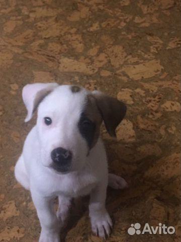Бесплатно щенок купить на Зозу.ру - фотография № 4