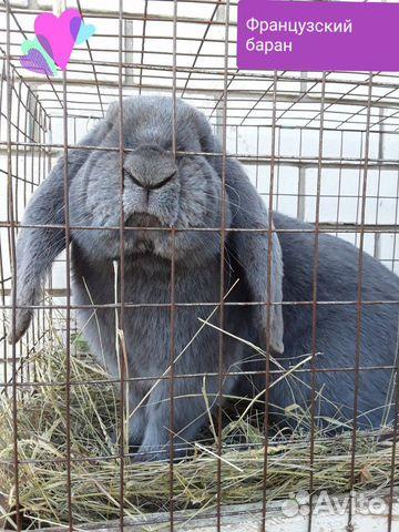 Кролики 89202417955 купить 1