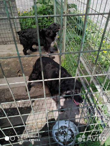 Сторожевая собака 89115334516 купить 3