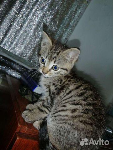 Отдадим котенка в хорошие руки  89515875711 купить 1