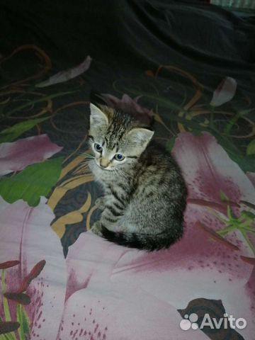 Отдадим котенка в хорошие руки  89515875711 купить 4