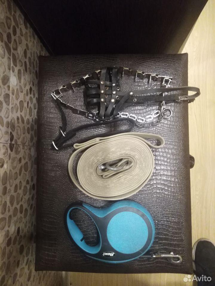 Ошейник, шлейка, поводок, намордник и игрушки  89149556204 купить 1