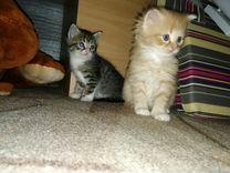 Отдаются в добрые руки 4 котёнка, 2 серых и 2 рыжи