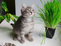 Юные хвостатые охотницы - котята