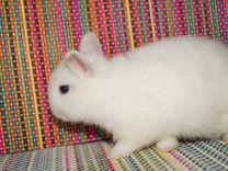 Белые милые зайки
