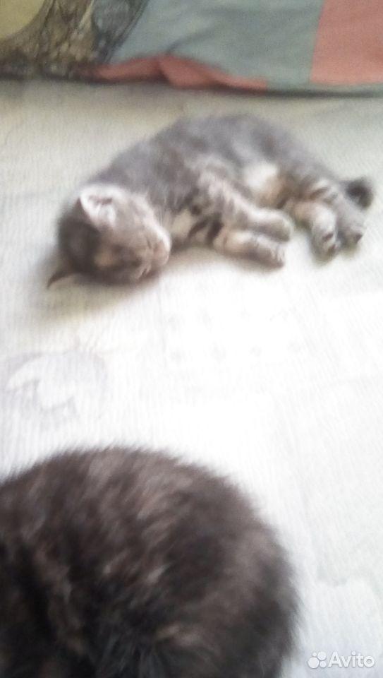 Кошка  89131592463 купить 6