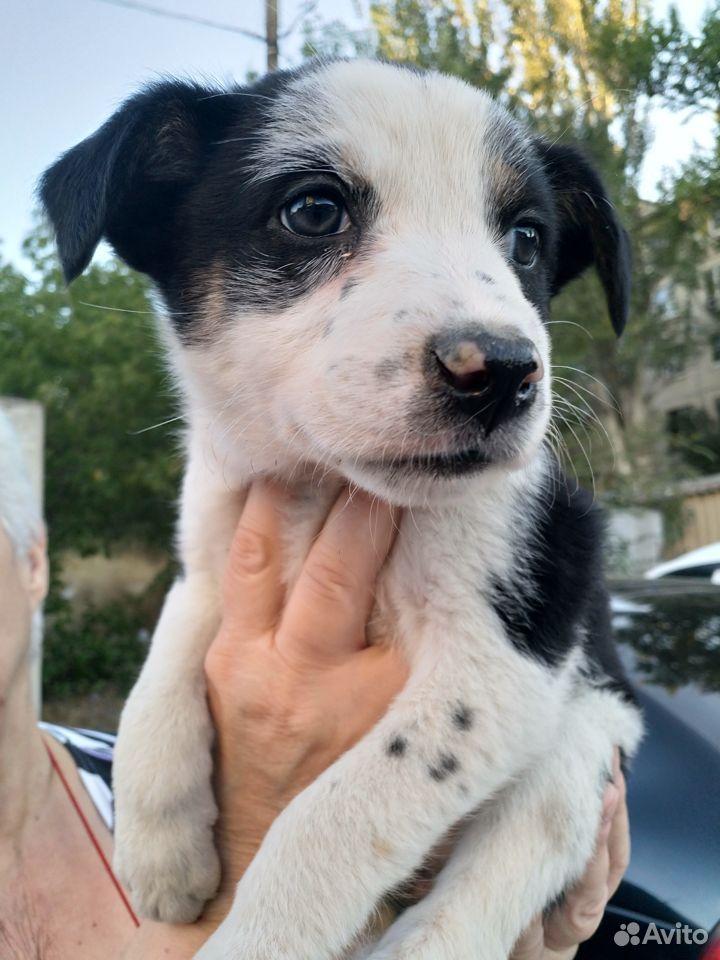 Собака  89876534345 купить 1