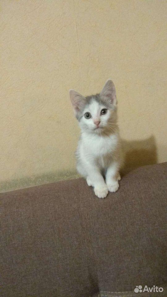 Отдам котенка в добрые руки  89990777484 купить 1