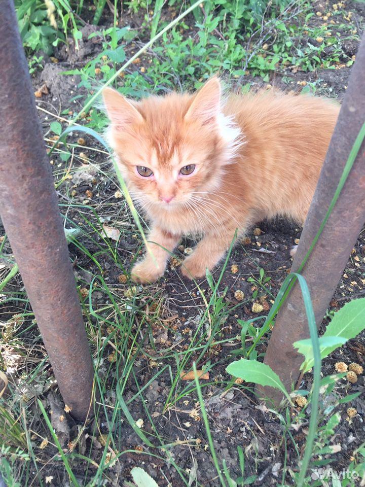 Кошка  89376692170 купить 1