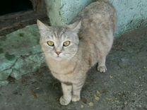 Одинокая кошка с янтарными глазами