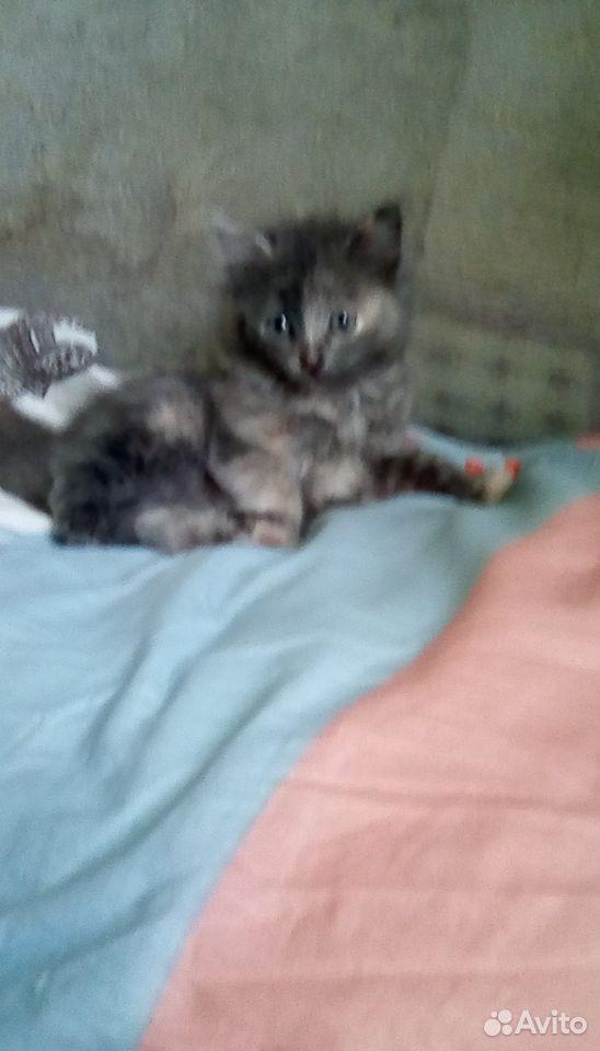 Кошка  89131592463 купить 2